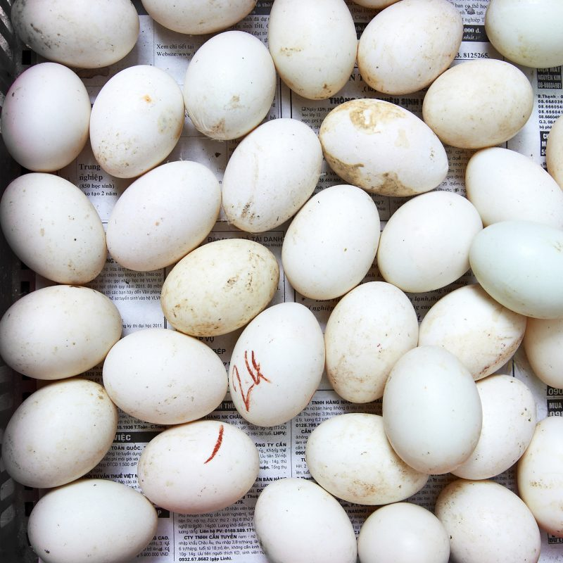 A cluster of duck eggs